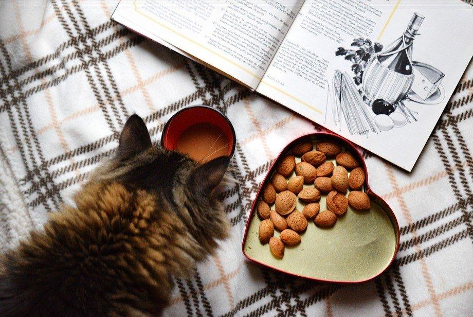 hoeveel moet een kat per dag eten