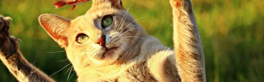 kattenvoeding vis foto pixabay